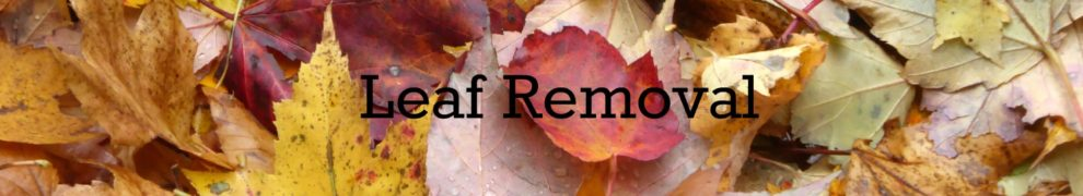 fall leaf removal, fall leaf clean up